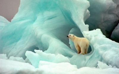 polar bears on the tundra