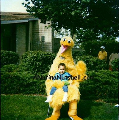 fake big bird costume