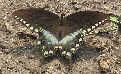 beach-butterfly
