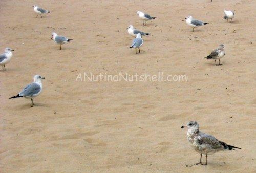 beach-seagulls