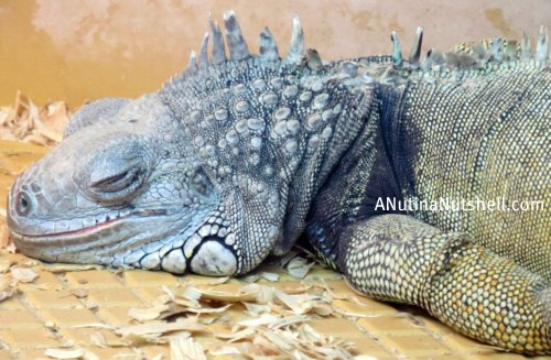 Neuseway-nature-center reptiles