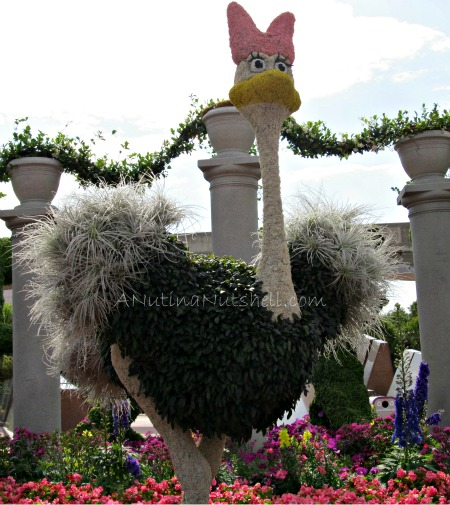 Epcot-Flower-Garden-Festival-ostrich