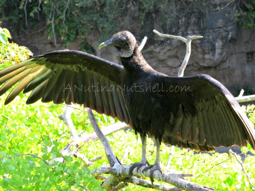 Wild-Africa-Trek-wild-bird