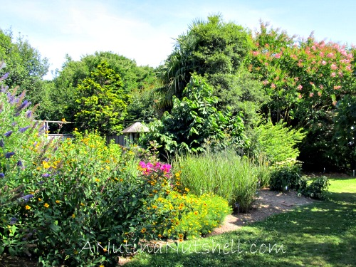 JC Raulston Arboretum flowers
