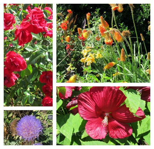 JC Raulston arboretum flower collage