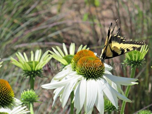 butterfly-on -flower
