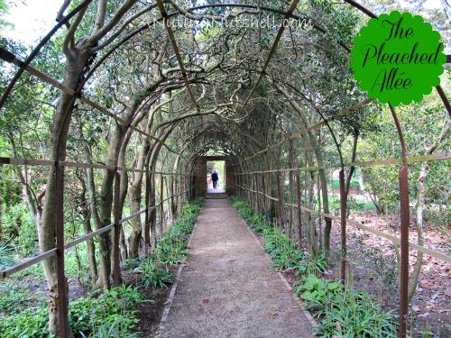 Pleached-Allée-Tryon-Palace-Gardens