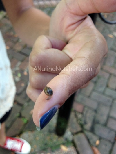 baby snail in New Orleans