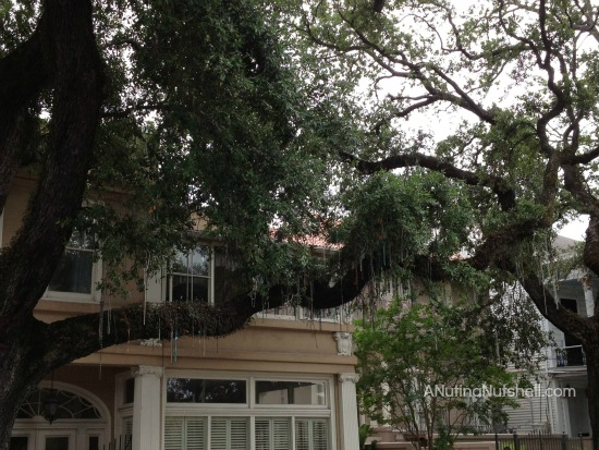 Garden District New Orleans Spanish moss