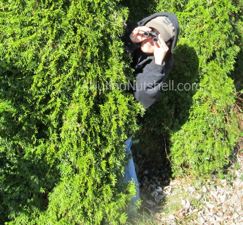 spying behind tree 1