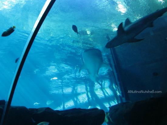Ocean Voyager exhibit - Georgia Aquarium