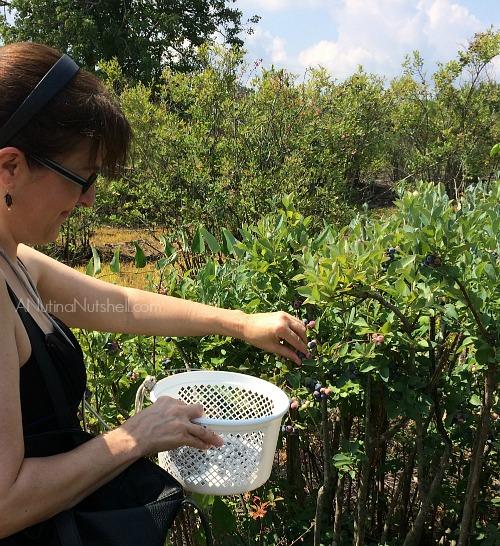 me-picking blueberries