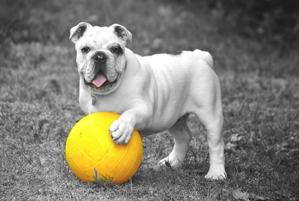 pet and ball
