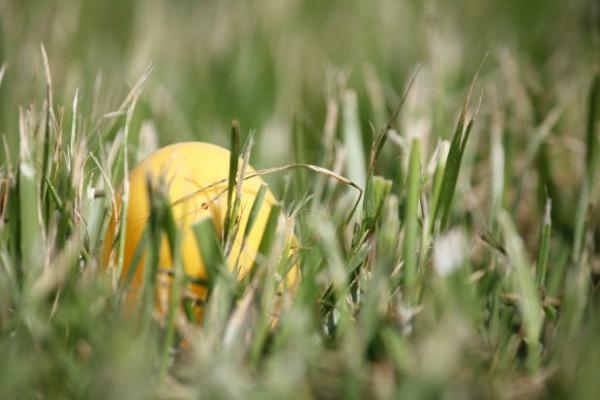 outdoor Easter egg hunt
