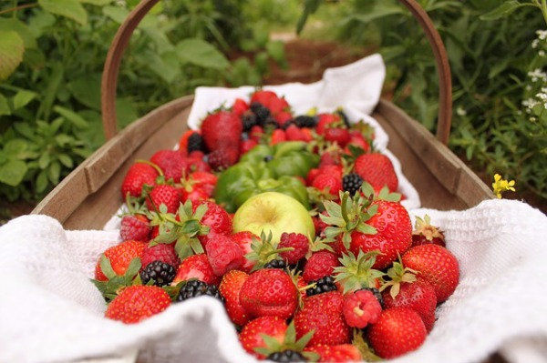 picnic with fresh produce