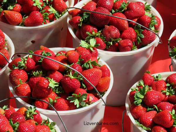 fresh strawberries from T&Y Strawberry Patch